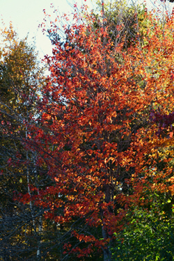 fall foliage in cloverland